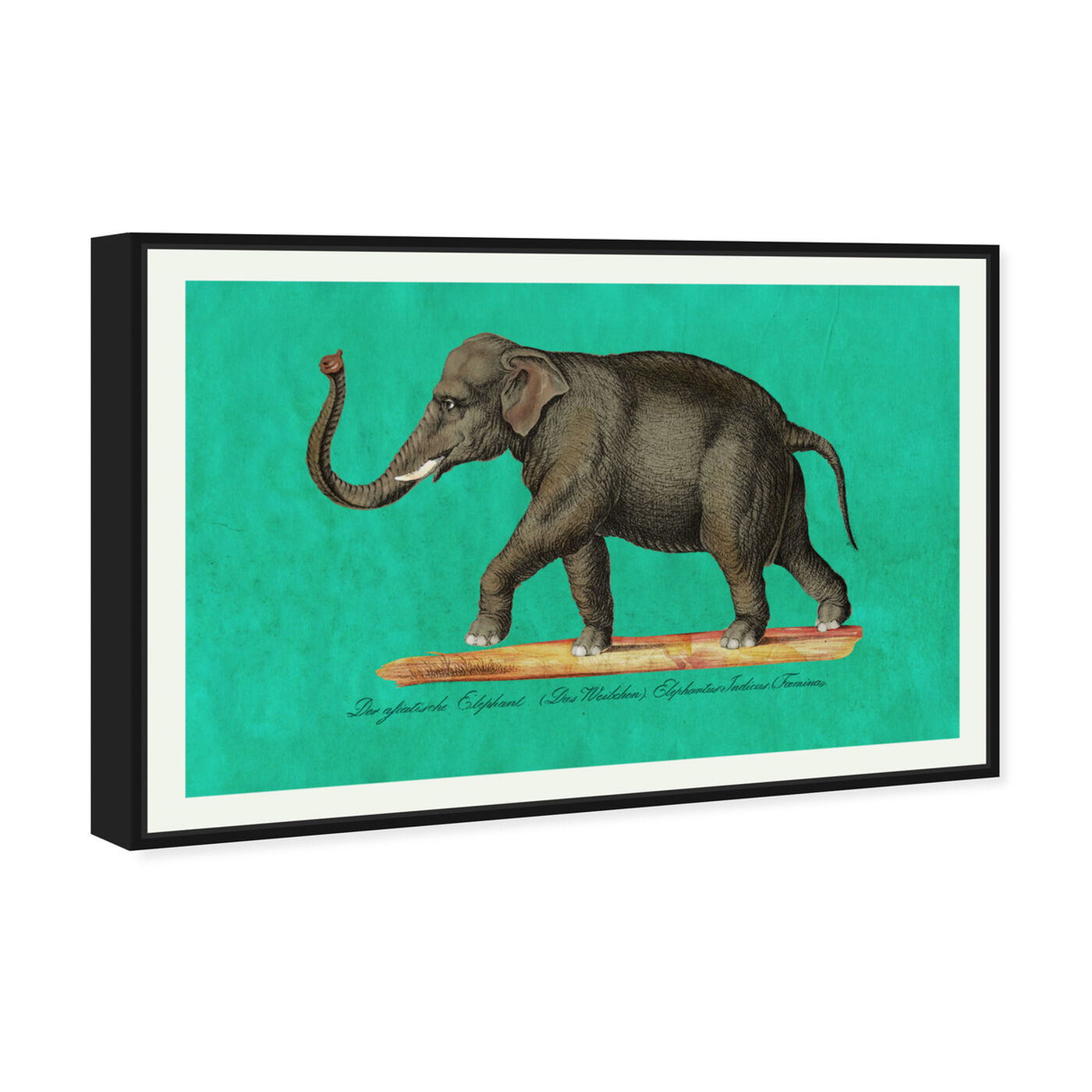 Angled view of Elephant II featuring animals and zoo and wild animals art.