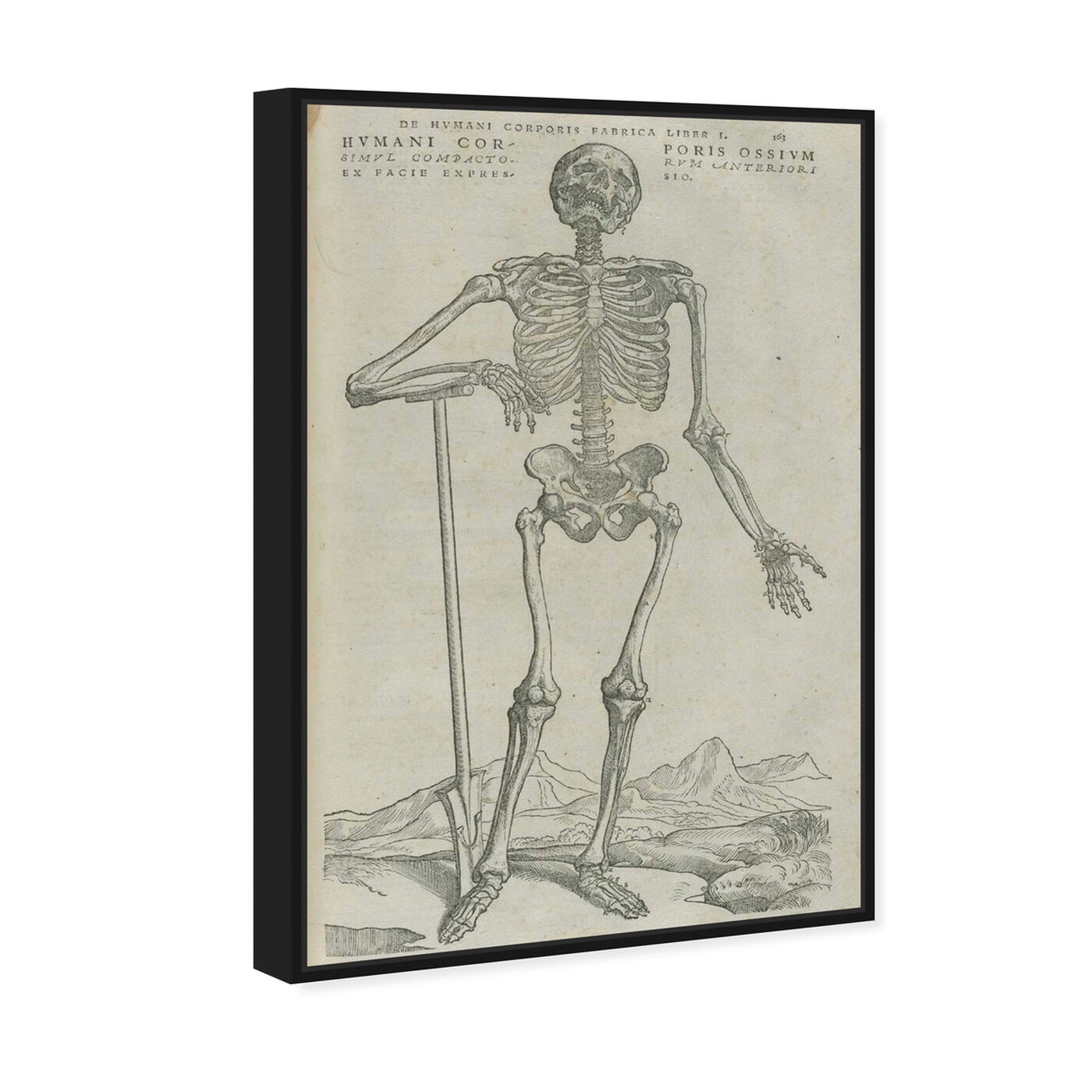 Angled view of Vesalius VIII - The Art Cabinet featuring symbols and objects and skull art.
