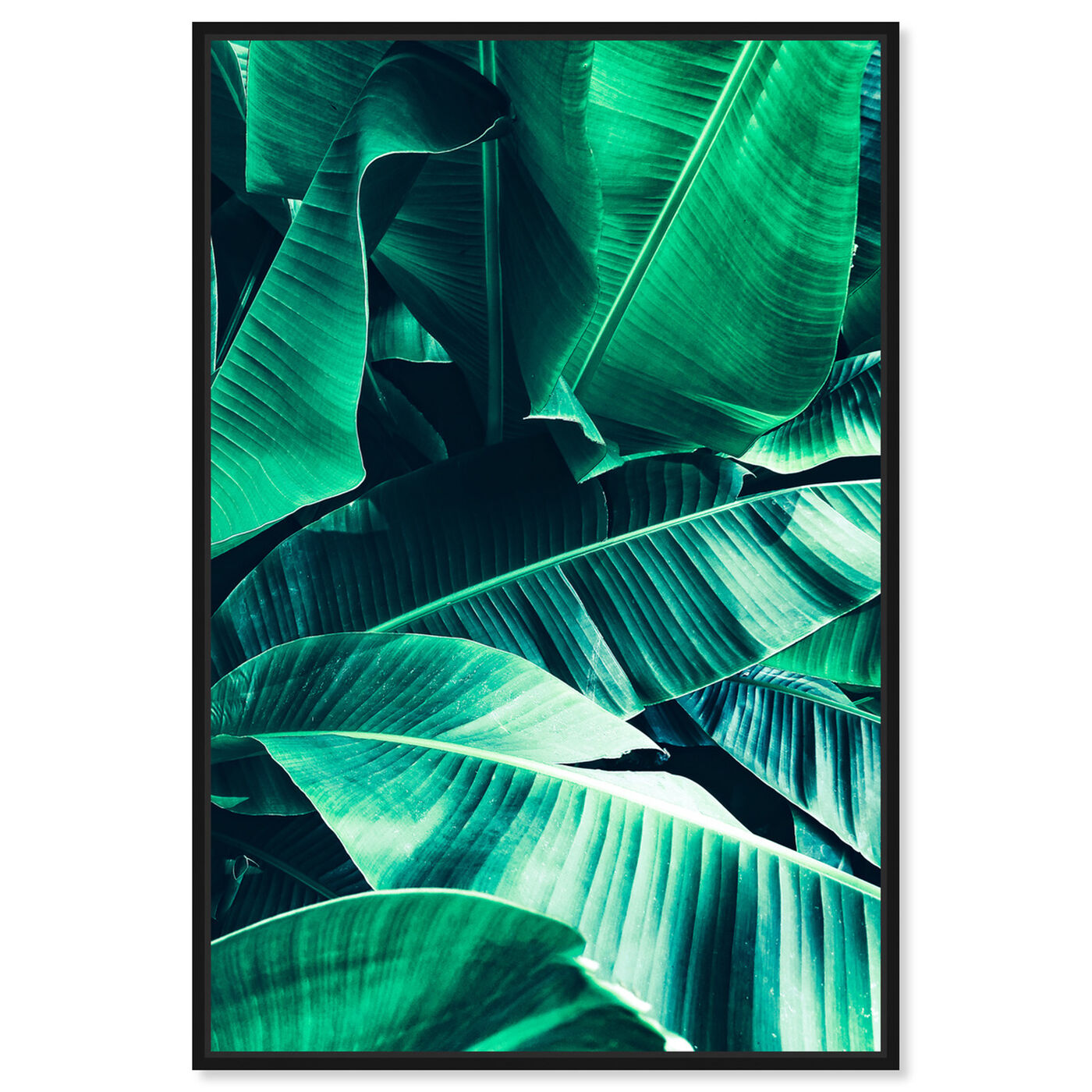 Front view of Banana Leaf Icon featuring floral and botanical and botanicals art.