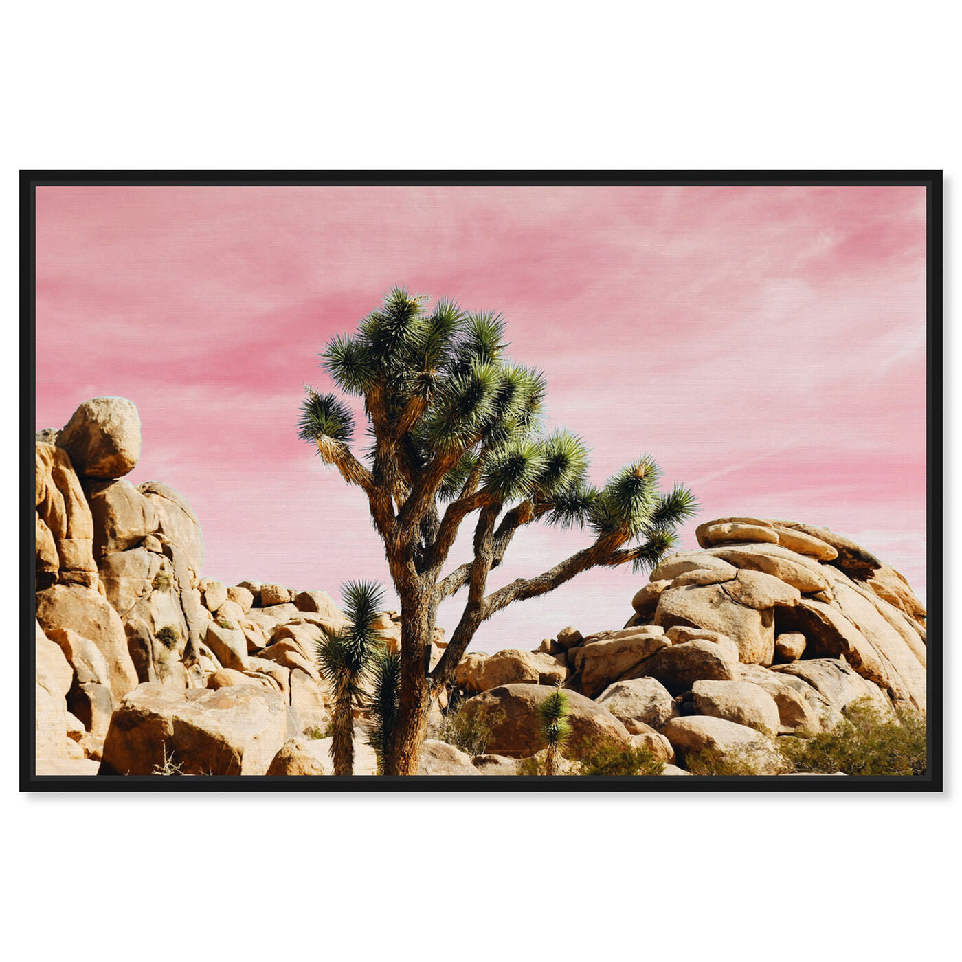 Front view of Joshua Tree Pink featuring nature and landscape and desert landscapes art.