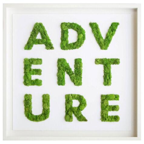 Adventure Moss