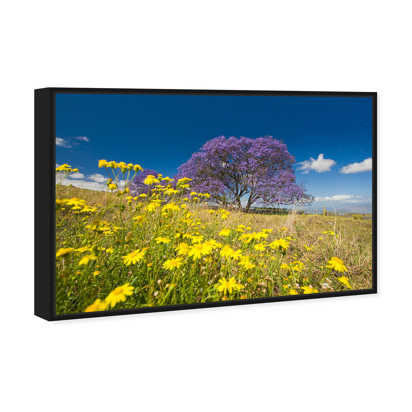 Angled view of Jacaranda Tree by David Fleetham featuring nature and landscape and country landscapes art.