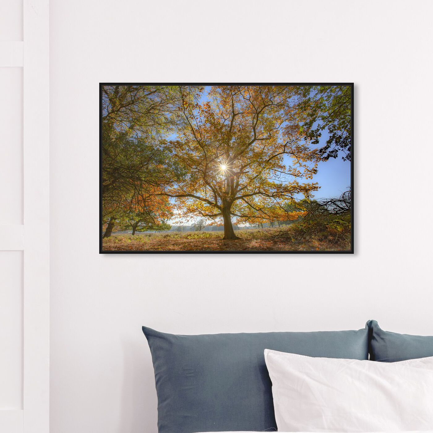 Hanging view of Curro Cardenal - Wisdom Tree featuring nature and landscape and forest landscapes art.