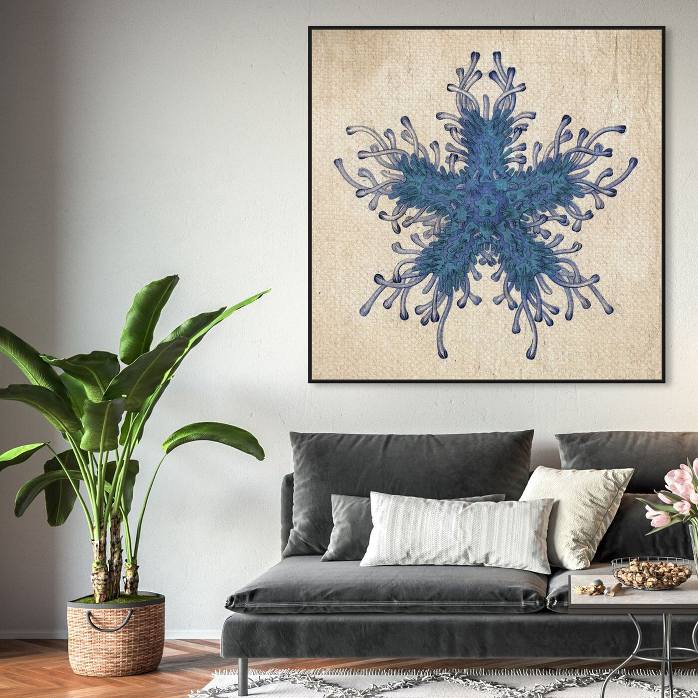 Hanging view of Asteridia I featuring nautical and coastal and marine life art.
