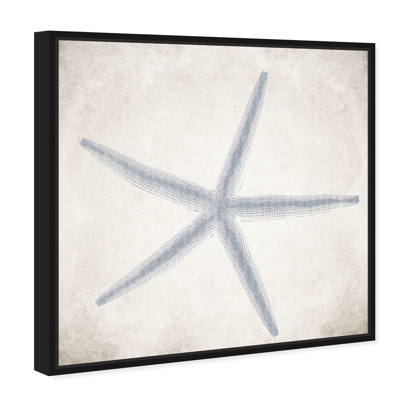 Angled view of Starfish Grey featuring nautical and coastal and marine life art.