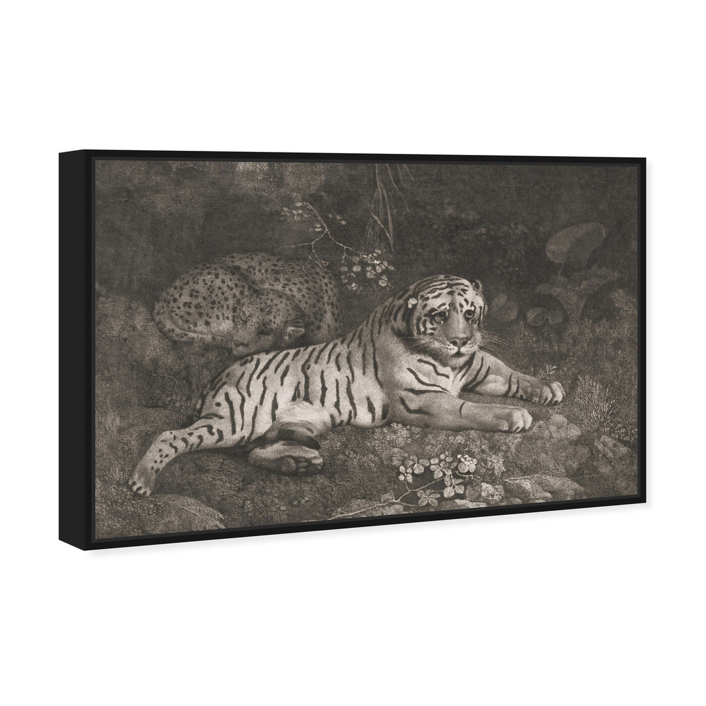 Angled view of G Stubbs - A Tiger Sleeping and a Leopard 1788 featuring animals and felines art.