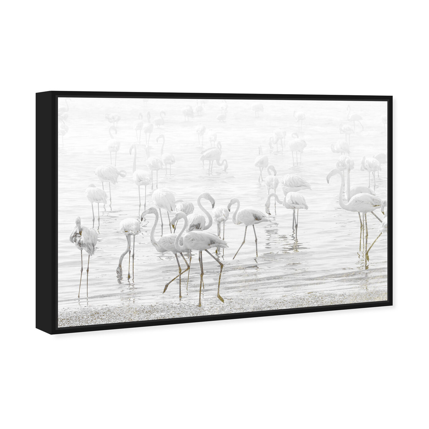 Angled view of White Feather Flamingos featuring animals and birds art.