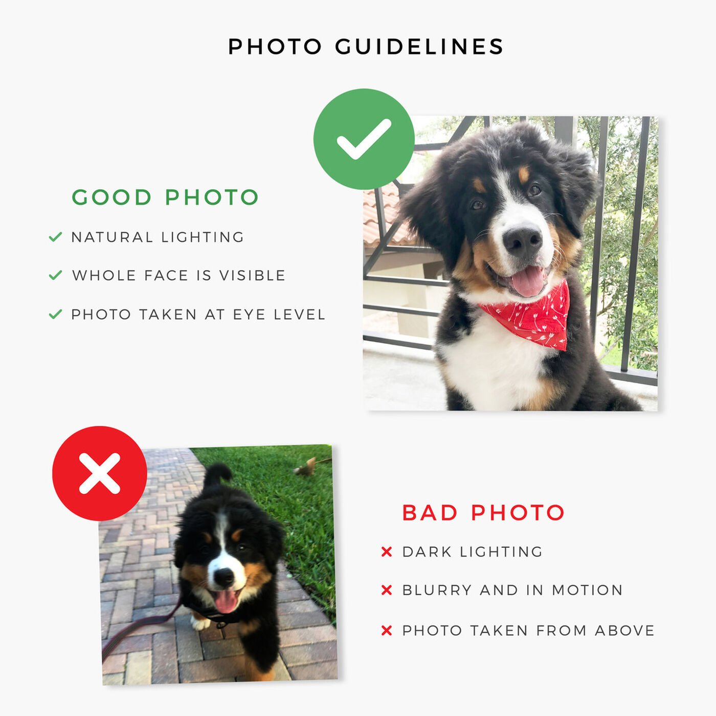 Pet photo guidelines.