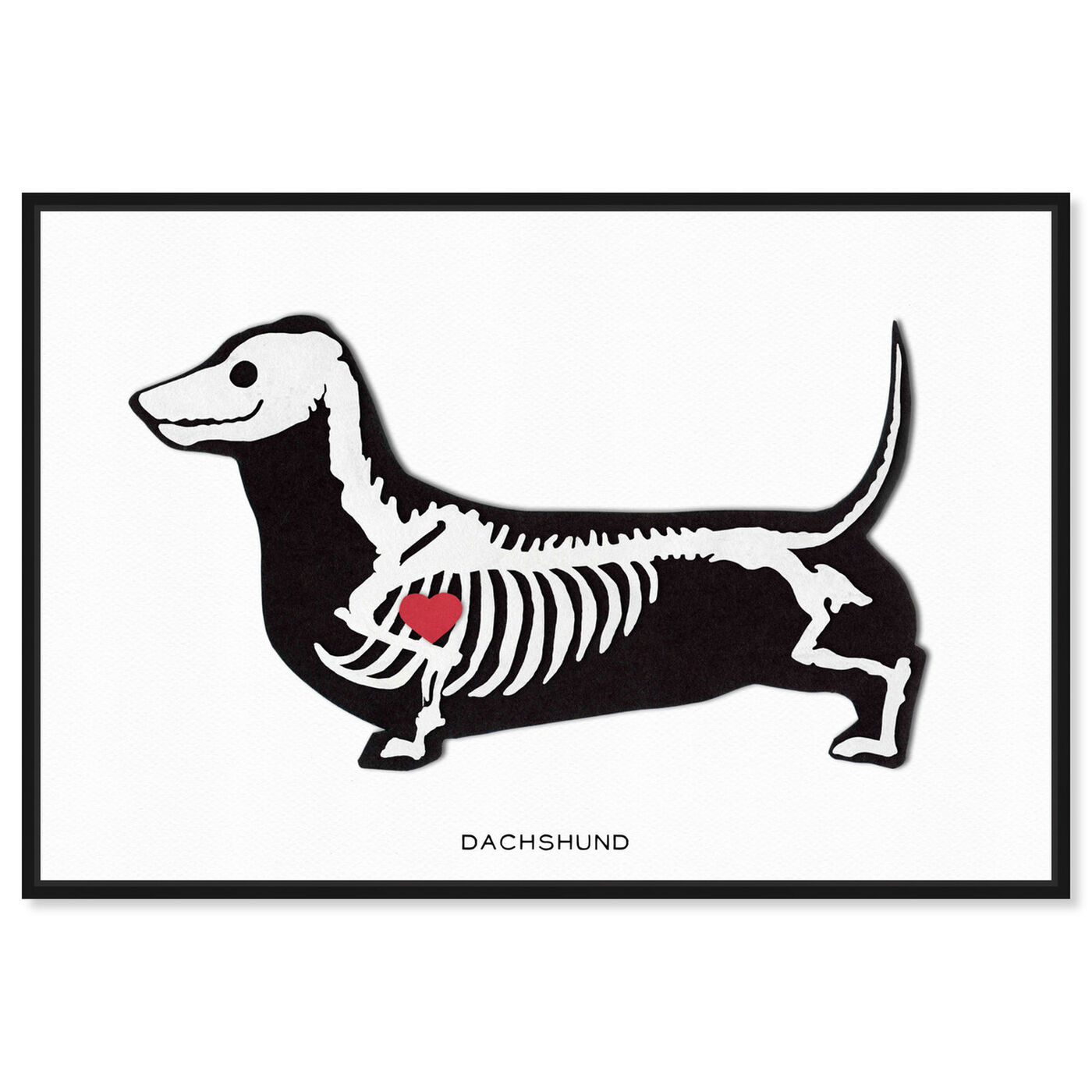 Front view of Dachshund Xray featuring animals and dogs and puppies art.