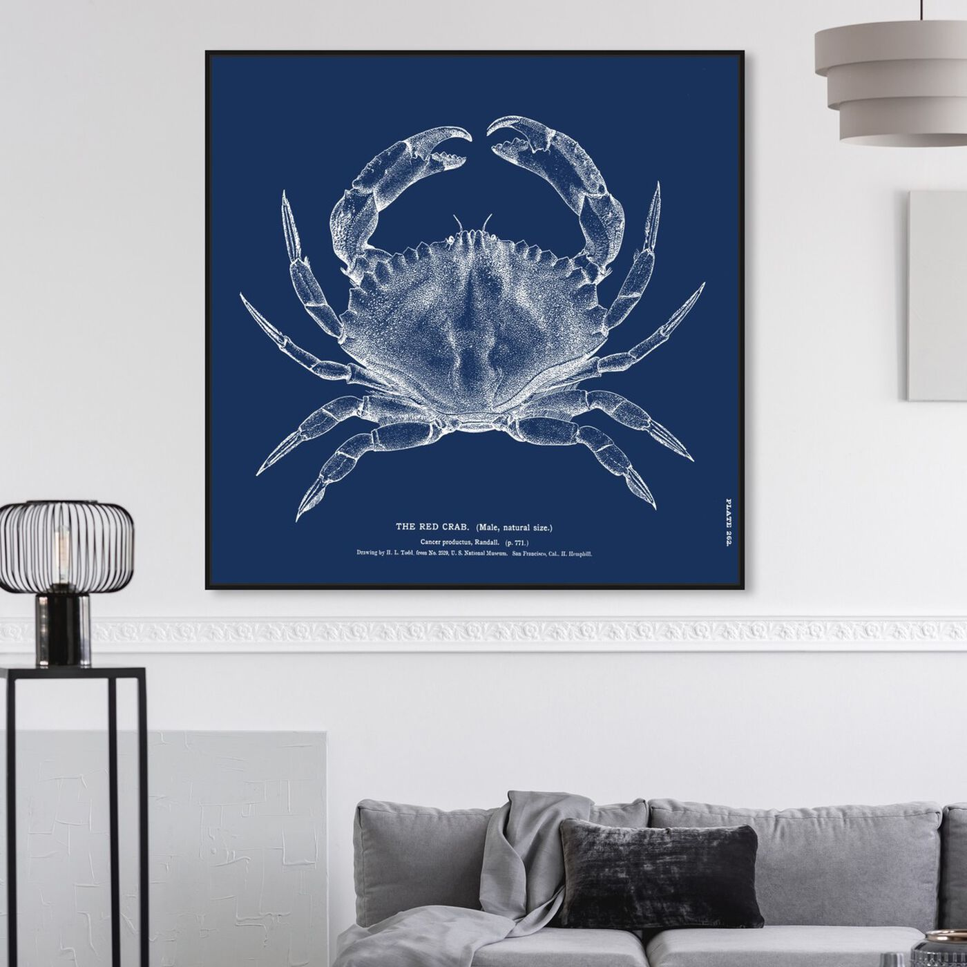 Hanging view of The Red Crab - Blue featuring nautical and coastal and marine life art.