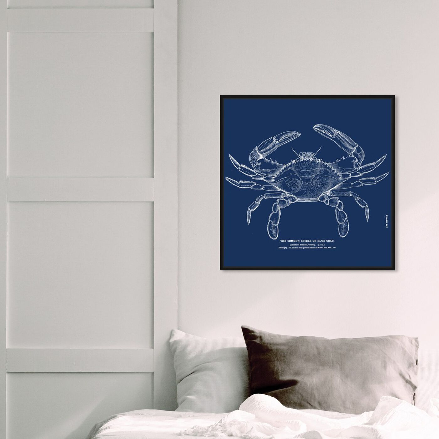Hanging view of The Common Blue Crab - Blue featuring nautical and coastal and marine life art.