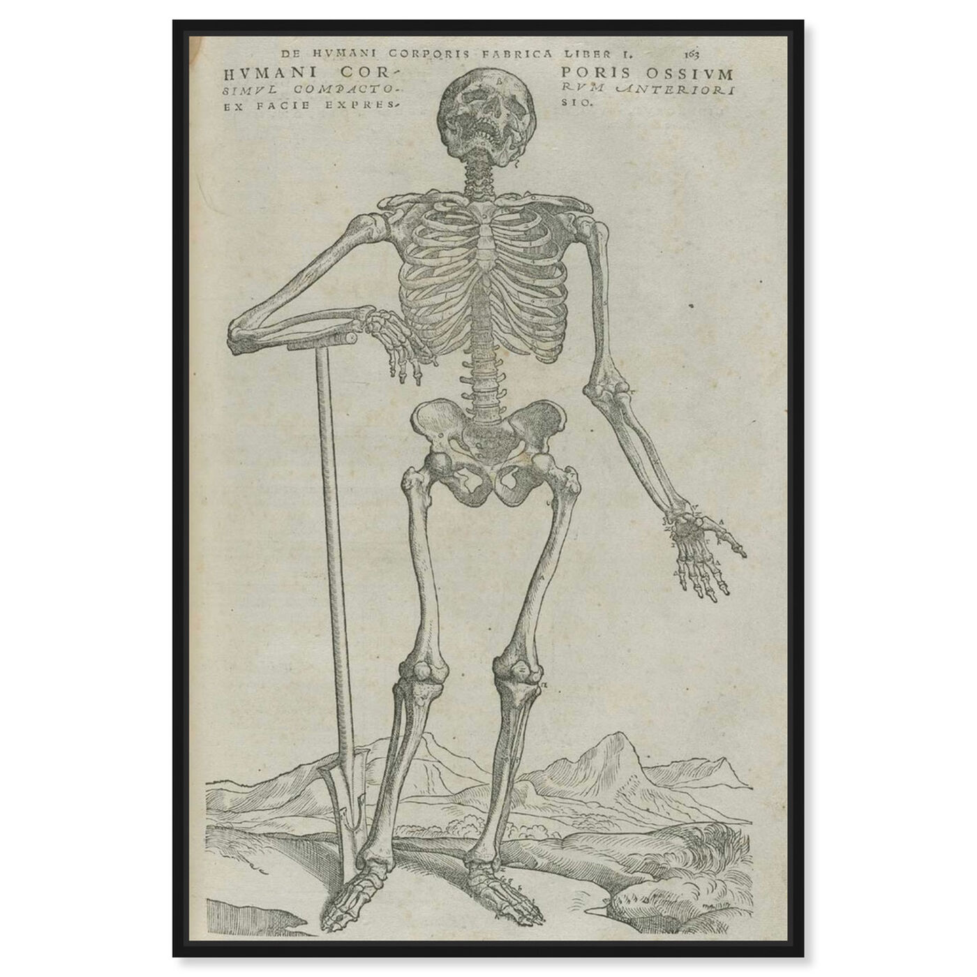 Front view of Vesalius VIII - The Art Cabinet featuring symbols and objects and skull art.