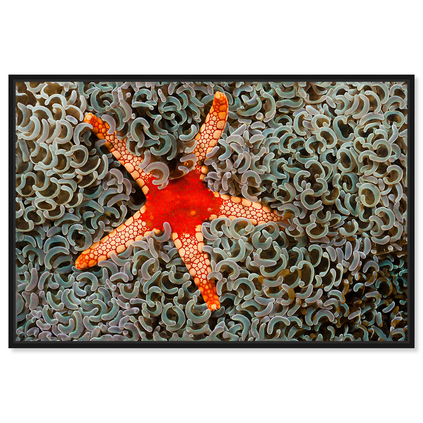 Front view of Necklace Seastar by David Fleetham featuring nautical and coastal and marine life art.