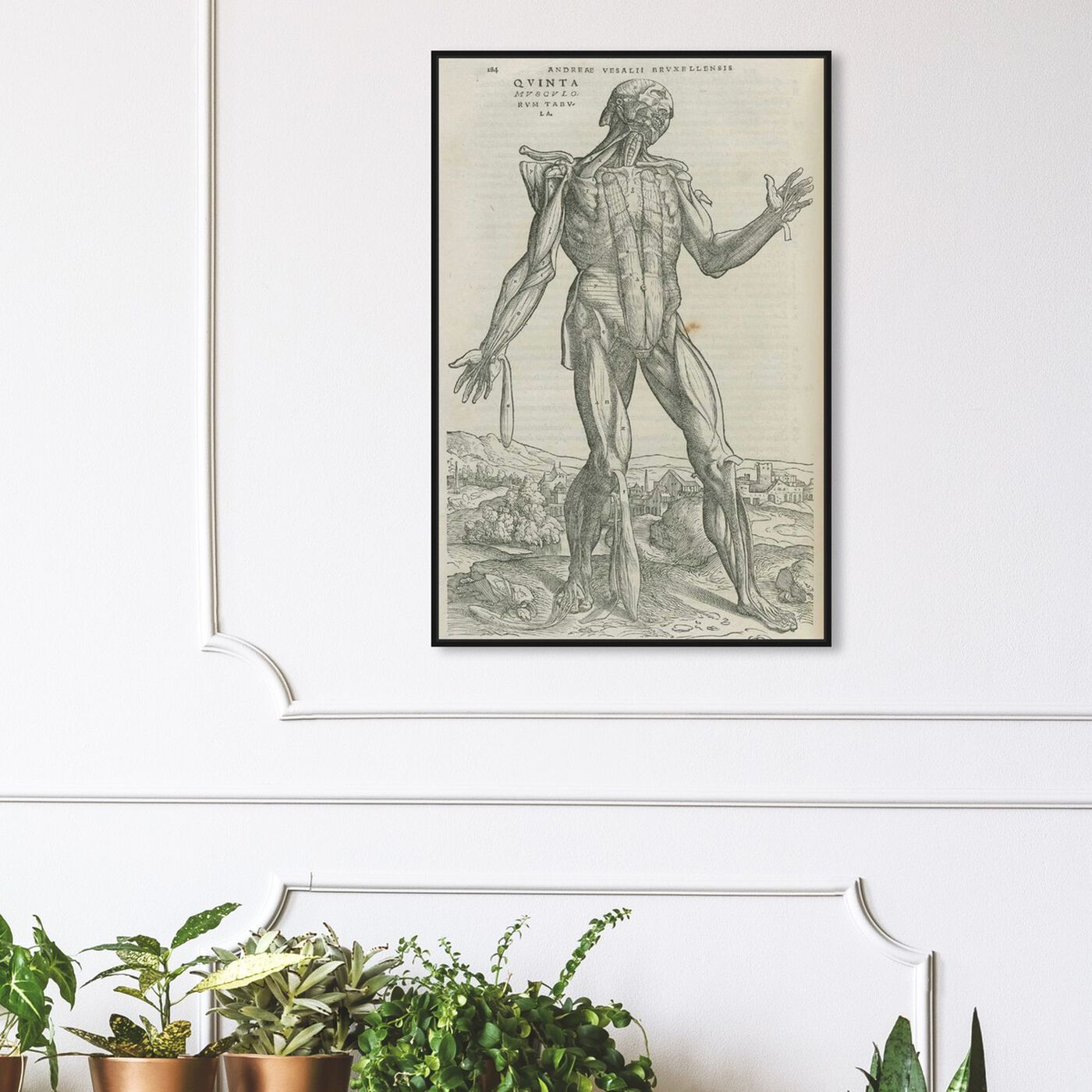 Hanging view of Vesalius II - The Art Cabinet featuring classic and figurative and nudes art.