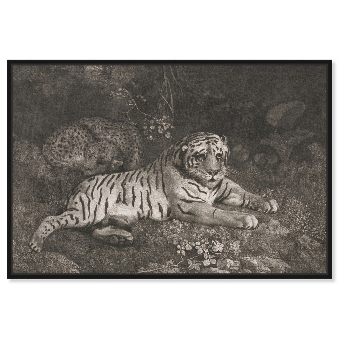 Front view of G Stubbs - A Tiger Sleeping and a Leopard 1788 featuring animals and felines art.