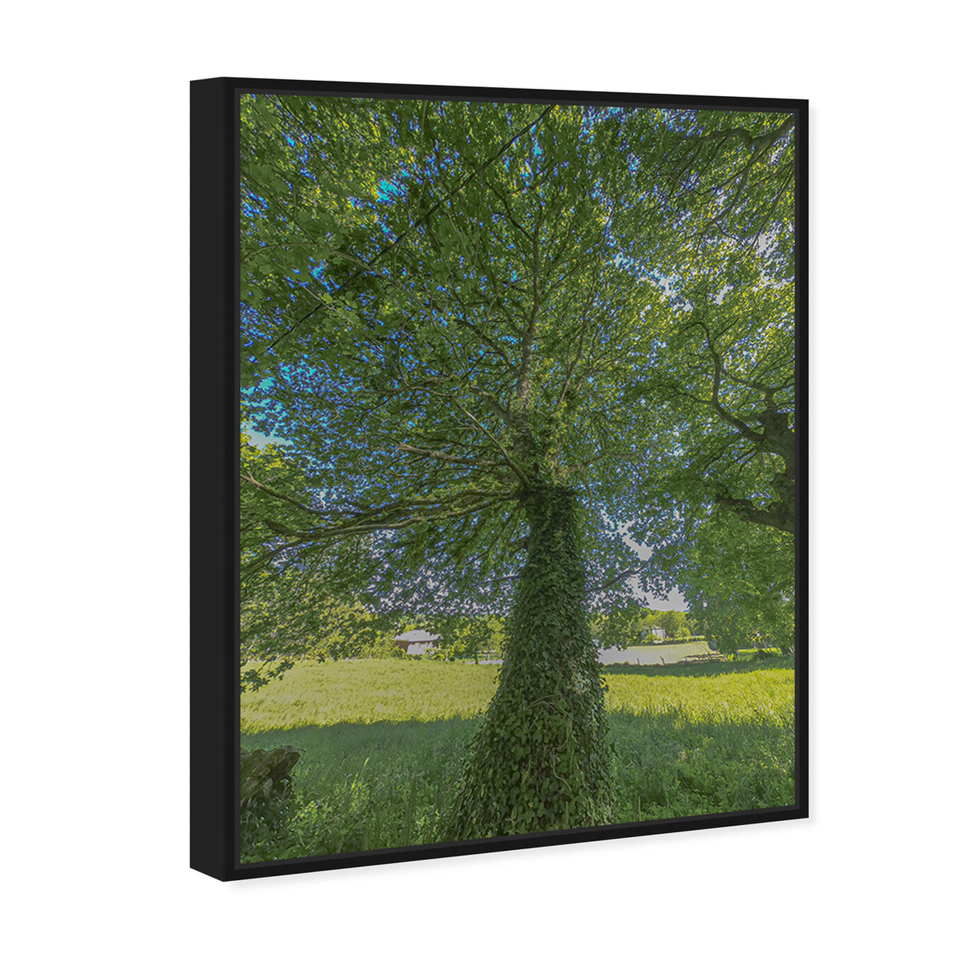 Angled view of Curro Cardenal - One Great Green I featuring floral and botanical and trees art.