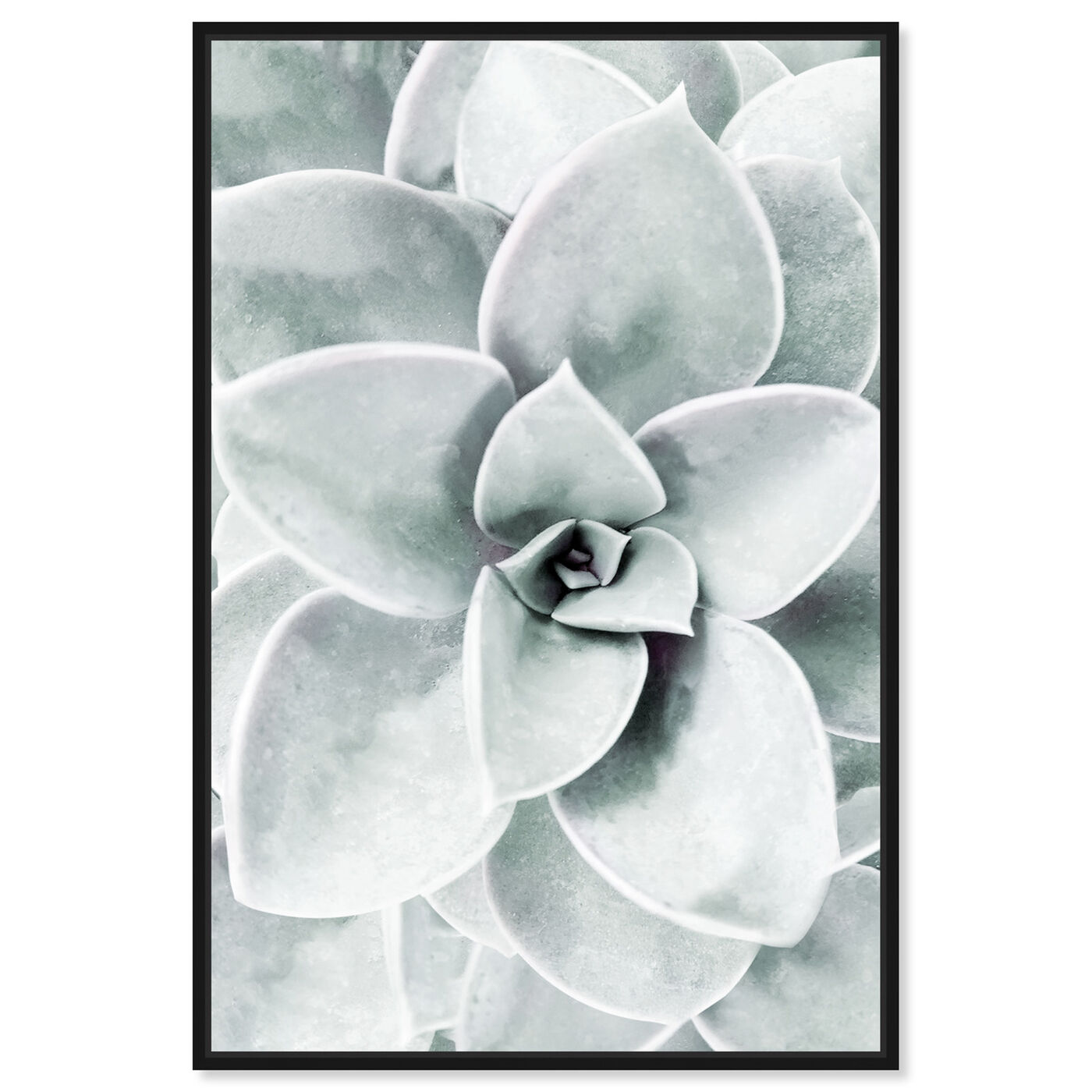 Front view of Succulent Zoom I featuring floral and botanical and botanicals art.