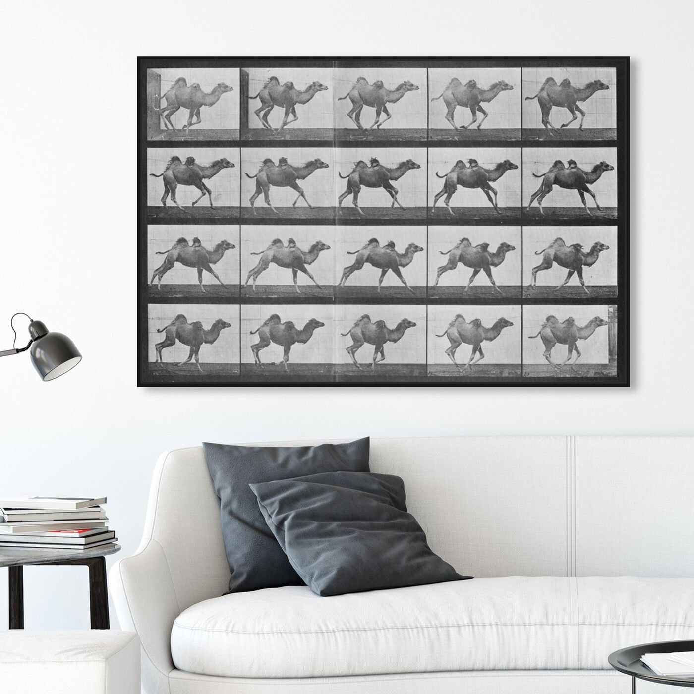 Hanging view of Camels in Motion featuring animals and zoo and wild animals art.