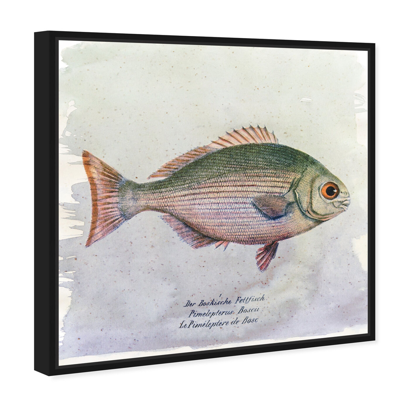 Angled view of Bosc Fish featuring animals and sea animals art.