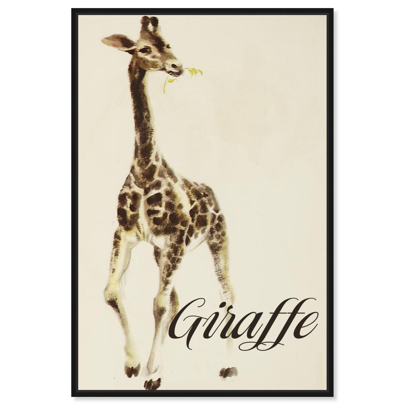 Front view of Giraffe featuring animals and zoo and wild animals art.