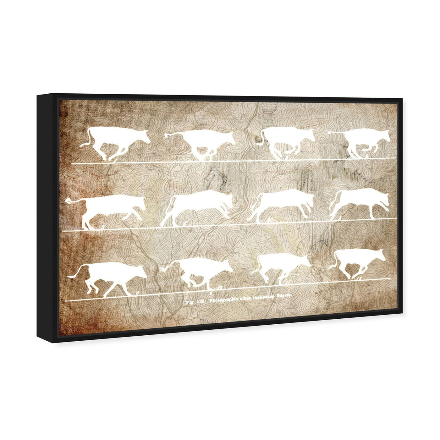 Angled view of Cows in Motion featuring animals and farm animals art.
