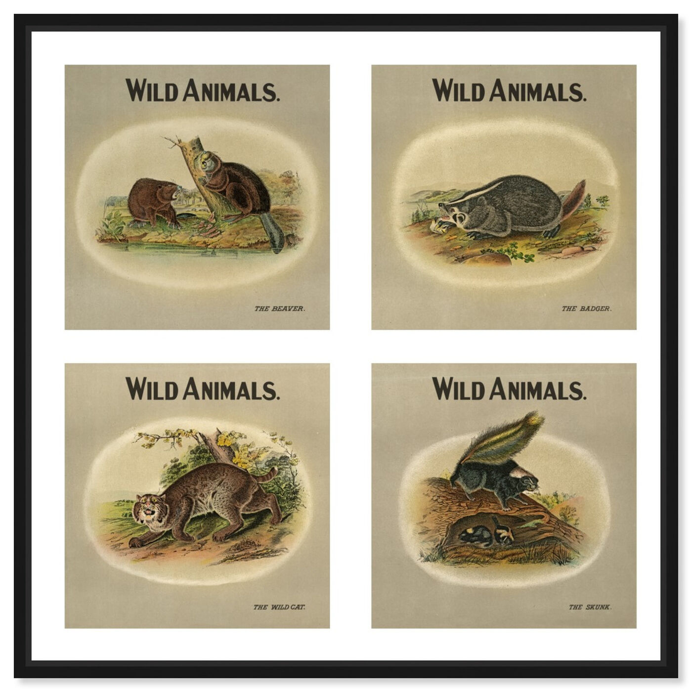 Front view of American Fauna featuring animals and zoo and wild animals art.