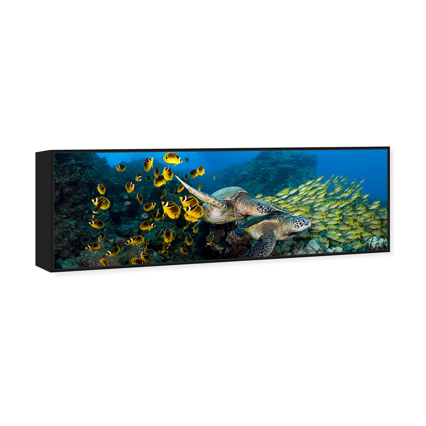 Angled view of School of Fish and Turtle by David Fleetham featuring nautical and coastal and marine life art.