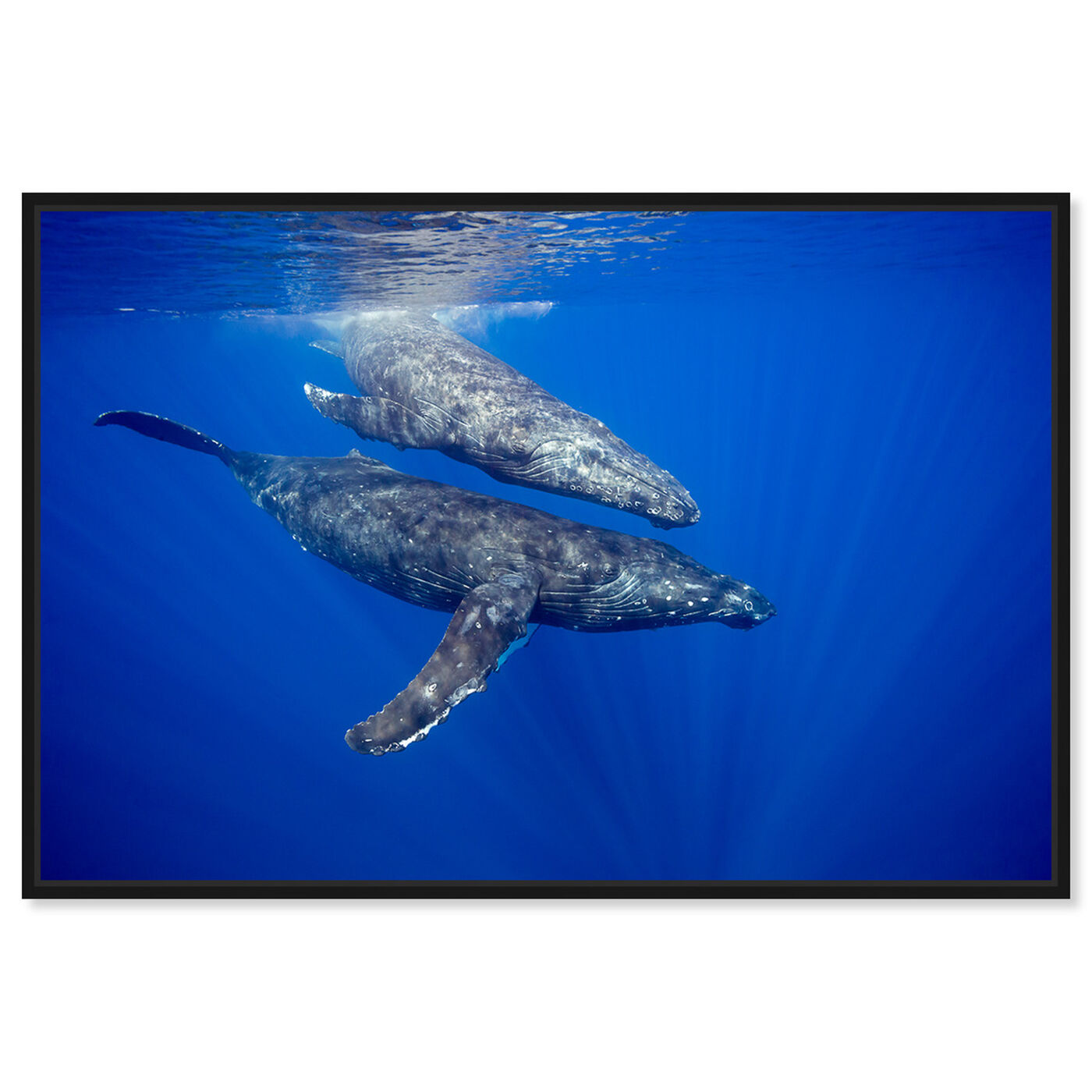 Front view of Humpback Whale Pair by David Fleetham featuring nautical and coastal and marine life art.