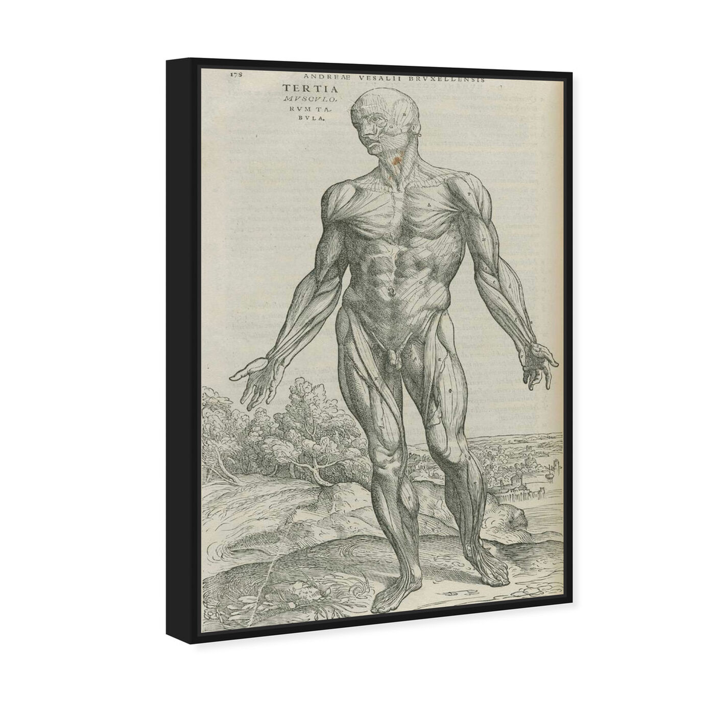 Angled view of Vesalius IV - The Art Cabinet featuring classic and figurative and nudes art.