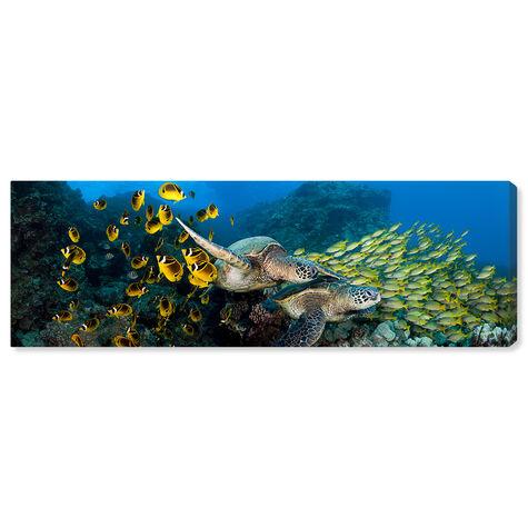 School of Fish and Turtle by David Fleetham