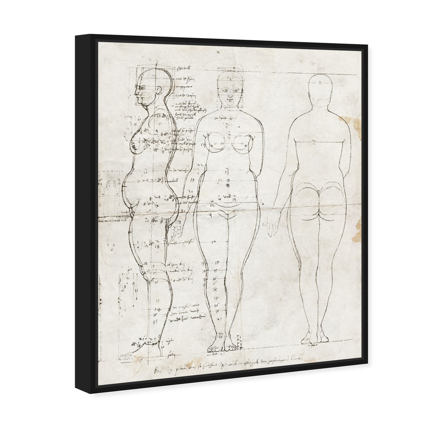 Angled view of Dürer Anatomical Engraving 1513 II featuring people and portraits and silhouettes art.