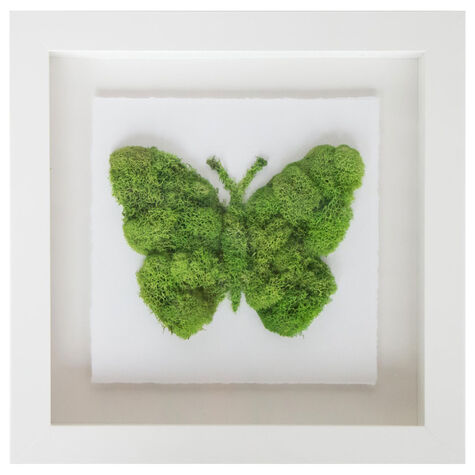 Butterfly Moss