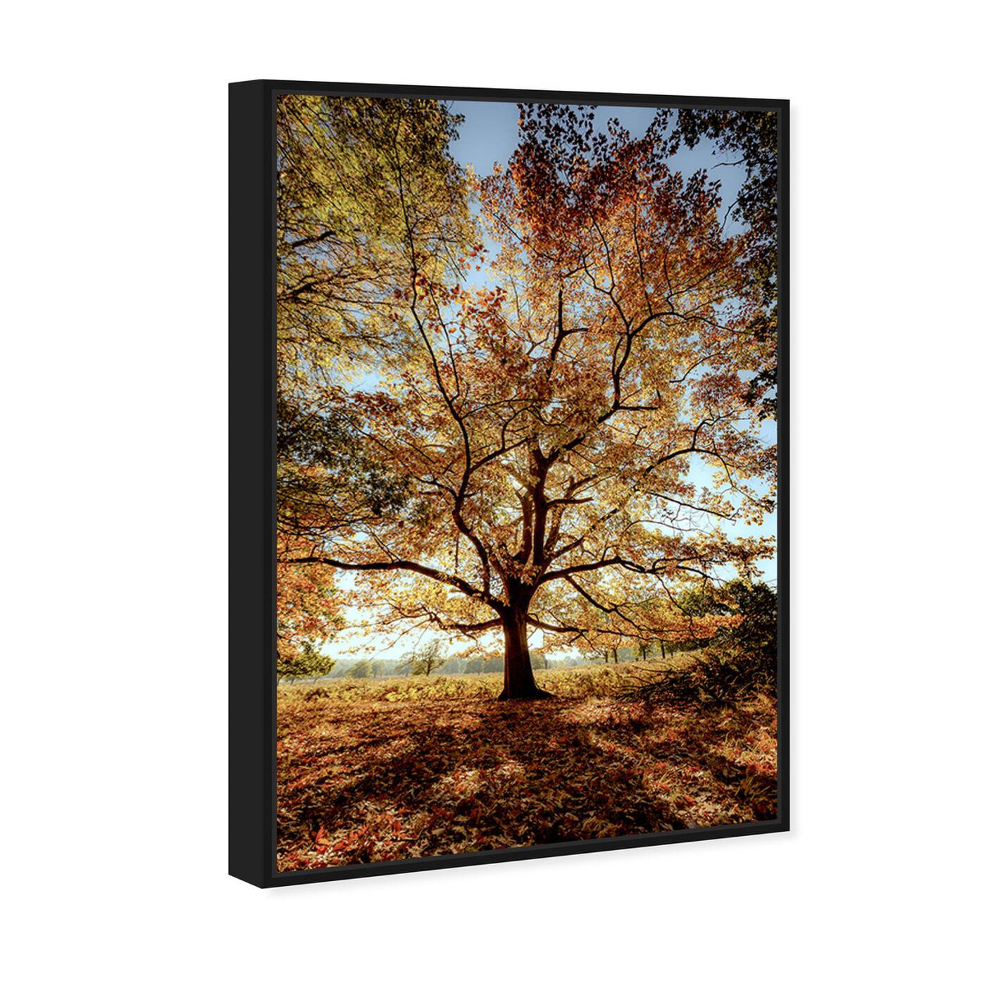 Angled view of Curro Cardenal - Wisdom Tree II featuring nature and landscape and forest landscapes art.