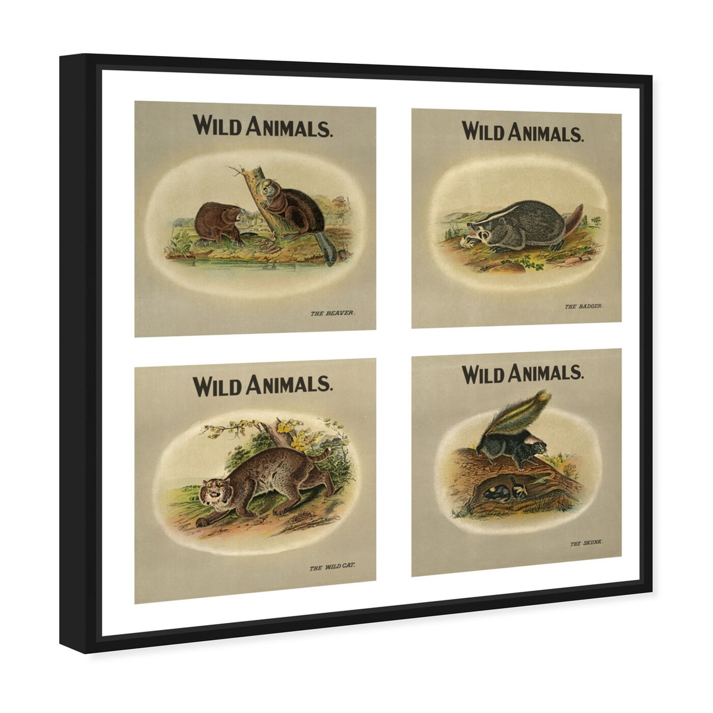 Angled view of American Fauna featuring animals and zoo and wild animals art.