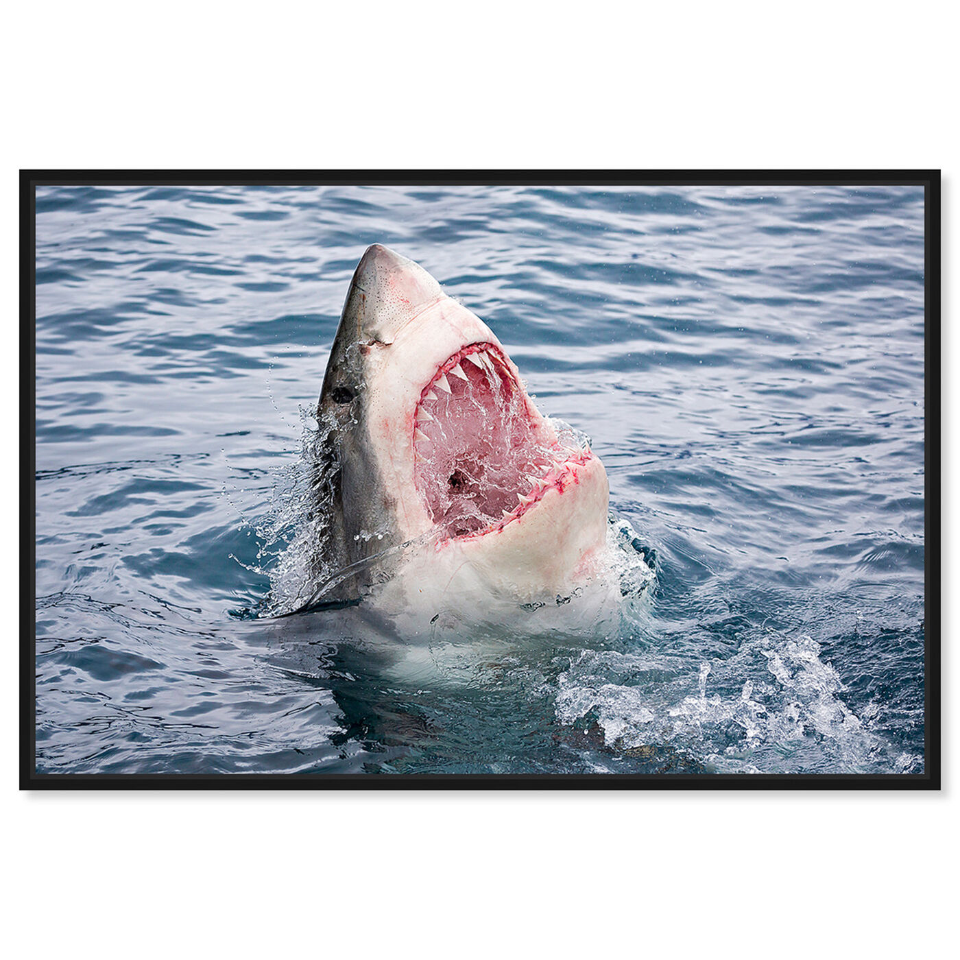 Front view of Geat White Shark Teeth by David Fleetham featuring animals and sea animals art.
