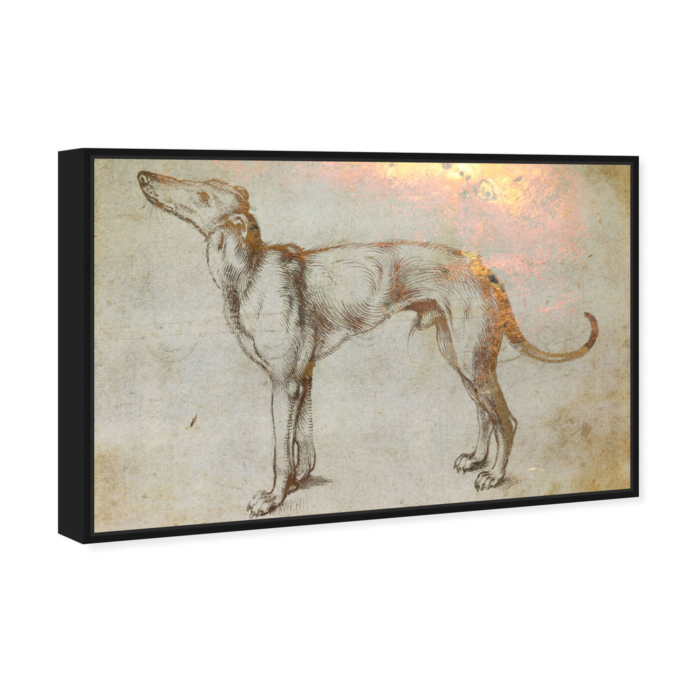 Angled view of Galgo featuring animals and dogs and puppies art.