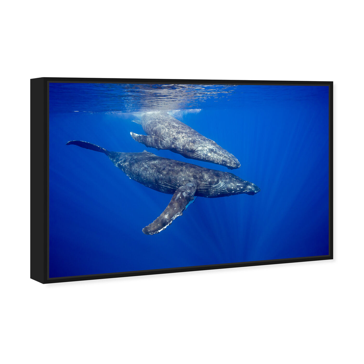 Angled view of Humpback Whale Pair by David Fleetham featuring nautical and coastal and marine life art.