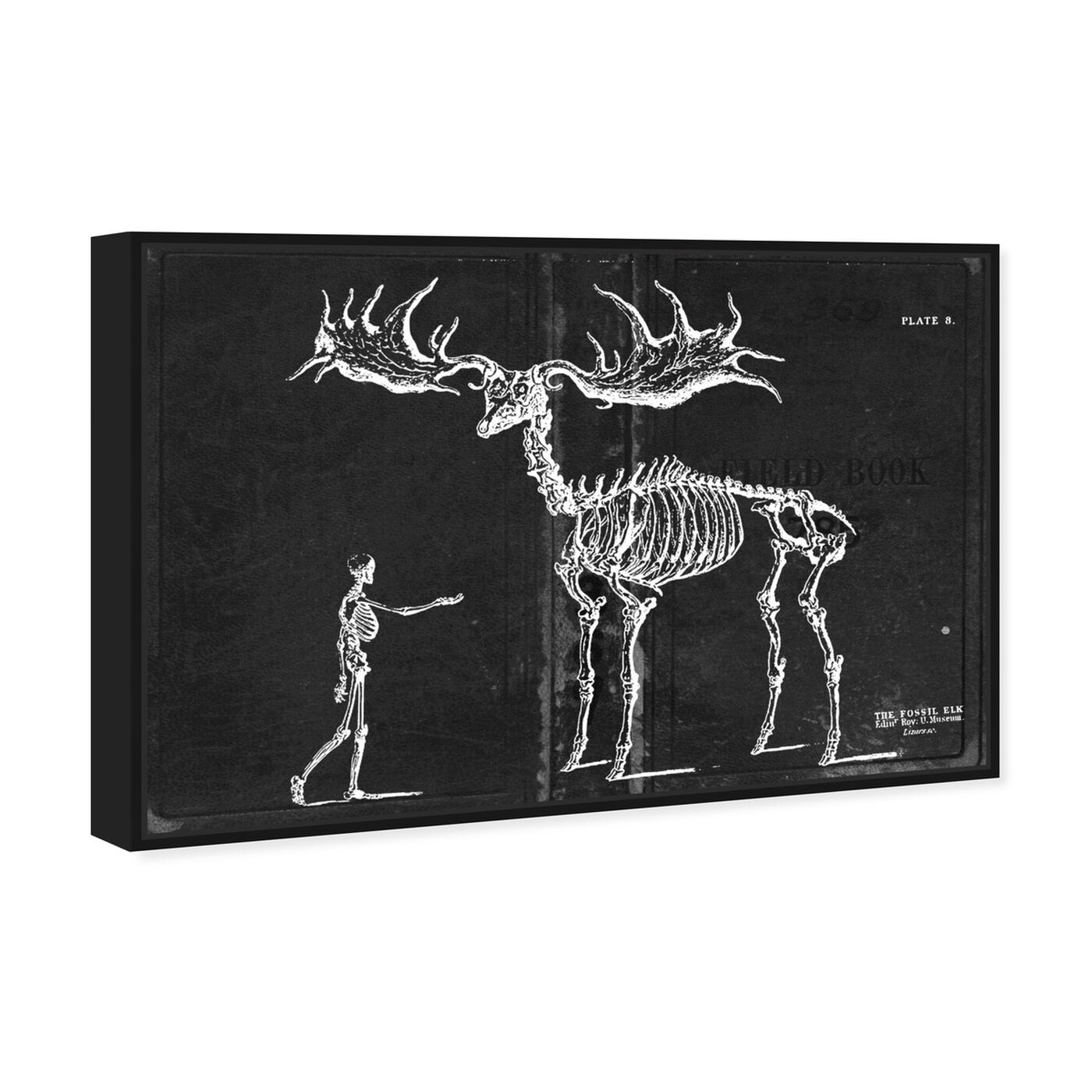 Angled view of Fossil Elk 1830 featuring animals and skeletons art.