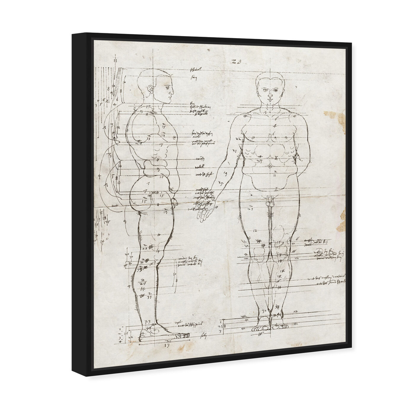 Angled view of Dürer Anatomical Engraving 1513 I featuring people and portraits and silhouettes art.