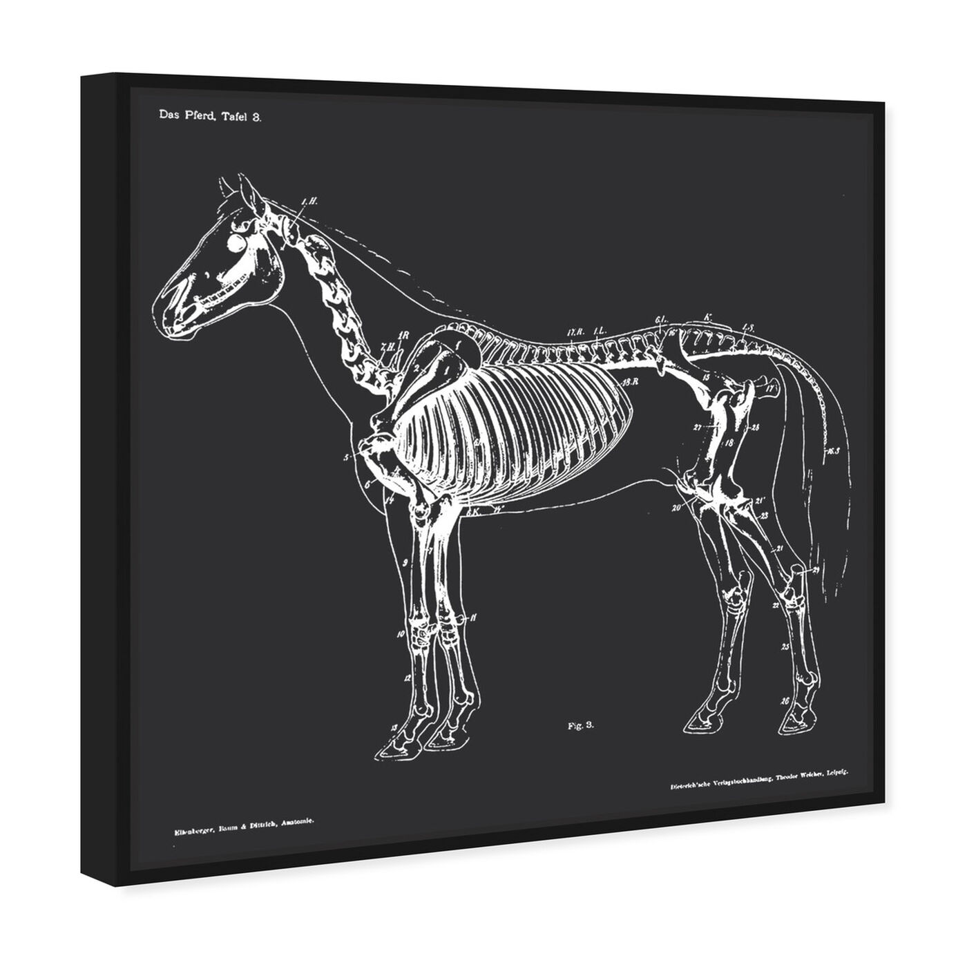 Angled view of Squelette Du Cheval featuring animals and skeletons art.