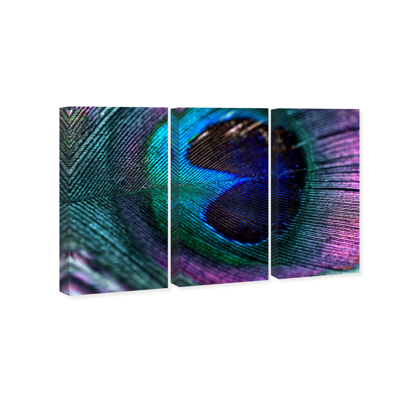 Royal Peacock Feather Triptych 51x34x3